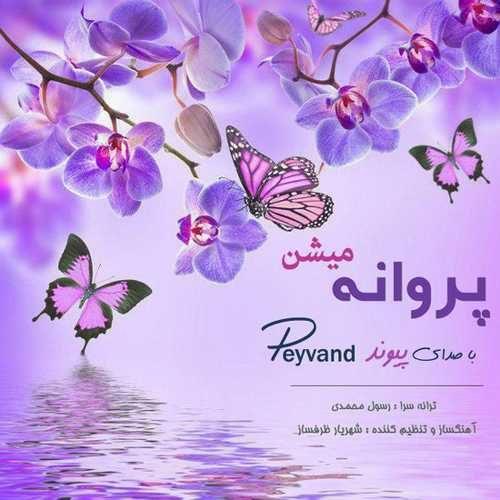 Peyvand Parvaneh Mishan 500x500 - دانلود آهنگ جدید پیوند بنام پروانه میشن
